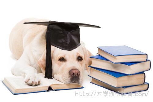 レトリバー犬と本