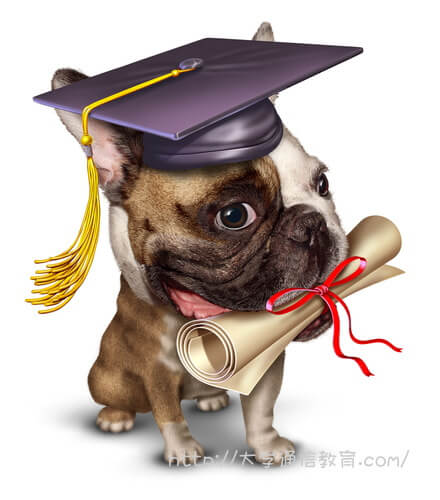 卒業証書を大事に加えるパグ