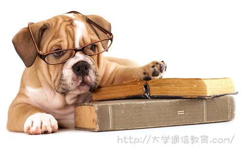 読書が趣味の愛犬