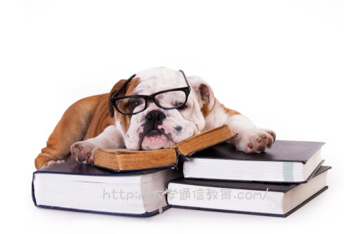 岩手県で買われている犬は、難しい本を読むと眠くなる