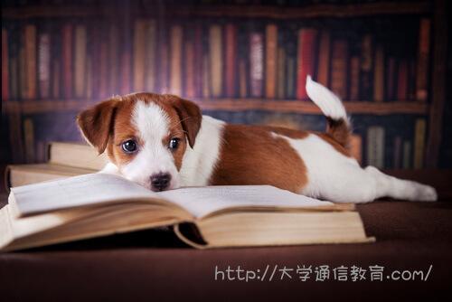 図書館に迷い込んだ子犬