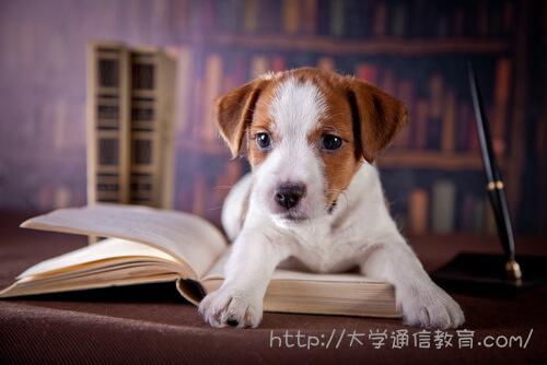 書斎で勉強中