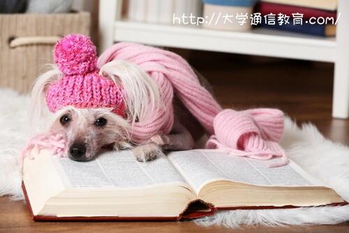 本と同じくらい大好きなペットの犬